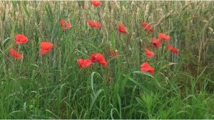 Somme1