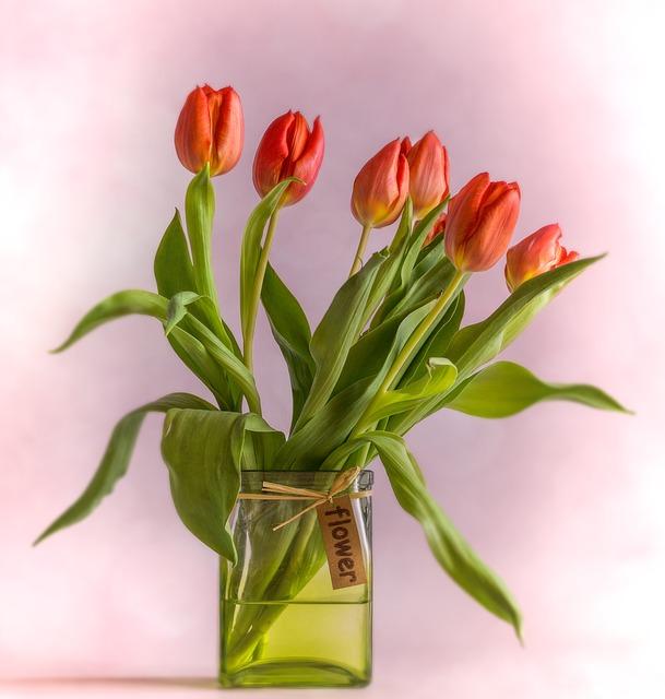 tulips-2178005_640